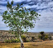 The Living Desert by Carla Jensen