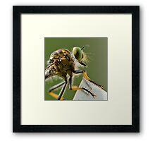 Robber Fly, waiting... Framed Print