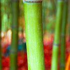 Bamboo by John  Kowalski
