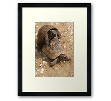 Slow Love - Tortoises  Framed Print