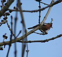 Can you Identify this Bird Please? by tammyins