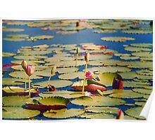 Dawn Lilies Poster
