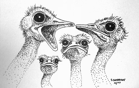 Ostrich Gossip by sally seabright