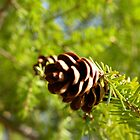 Little pine cone by Lauryn Guyer