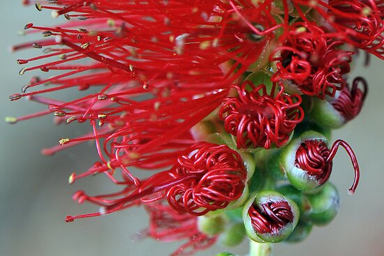 bottle brush bud by nadine henley