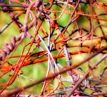 Tangled by pmn-photography
