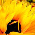 Embracing Petals by Susan Bergstrom