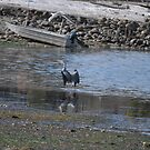 Blue heron has landed by TheKoopaBros