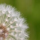 Make A Wish by Friendly Photog