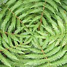 Fern Circle by Siddles