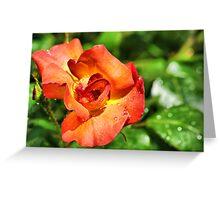 Rain n Rose Greeting Card