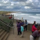 Whale Watching, Logan's Beach Warrnambool by DaBimages