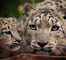 Snow Leopards by Natalie Manuel