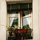Rome Window by swight