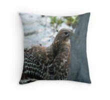 Hawk hiding in the shadows  Throw Pillow