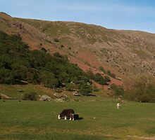 Beyond Stonethwaite with Herdwicks by WatscapePhoto