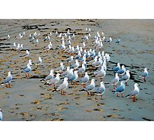 Meeting of the Gulls Photographic Print