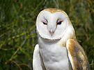Barn Owl ~ Hey baby....... by Kimberly Chadwick