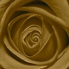 Rose - Sepia by Trev159