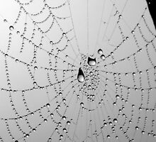 web drops by lukasdf