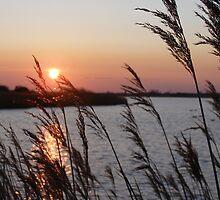 through the reeds by velveteve