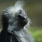 King Colubus Monkey by Franco De Luca Calce