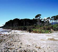 West Coast, New Zealand by Louise Marlborough