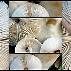 Lepiota Mushrooms by Magee