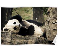 Mei Xiang @ The National Zoo Poster
