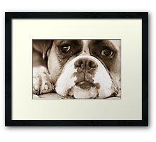 Bored Boxer Framed Print