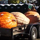 Giant Pumpkins by farmbrough