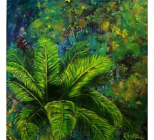 Cycad  Photographic Print