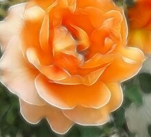 Peach Rose 2 Purity by Christopher Johnson