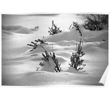 Sage Brush Winter Poster