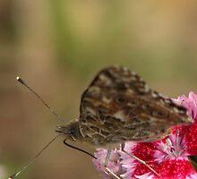 mmmmm.....Nectar!! by Sheila  Pasket