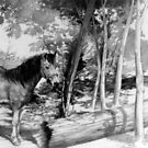 Horse in Woods by Luis Perez