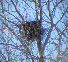 Crow's Nest by MaeBelle