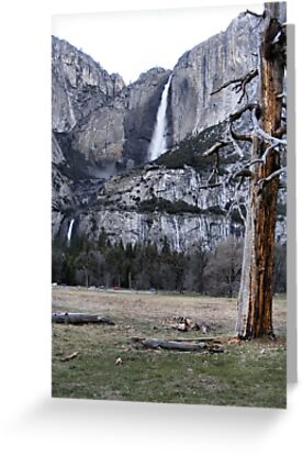 Upper & Lower Yosemite Falls by NancyC