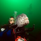 Diver with Wolf Eel by Greg Amptman