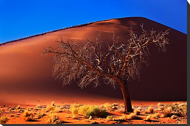 Dune 45, solitary tree. Sossusvlei, Namibia. Africa. by photosecosse /barbara jones