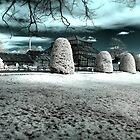 Botanic Panoramic by Roddy Atkinson
