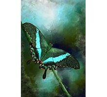 Emerald Peacock Swallowtail Photographic Print