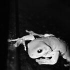 Stealth frog by kschoone
