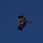 Birds of Prey by NickBlake