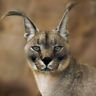 Caracal by Natalie Manuel