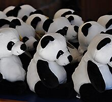 Panda -  ering to the Crowds by Michael Tapping
