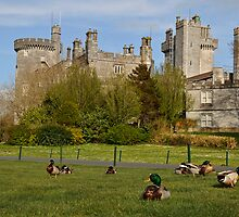 Dromoland Castle Duck walk! by upthebanner