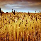 Rushes by Delphina1974