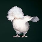 Non Bearded White Polish Bantam by Norman Schwartz