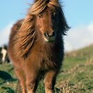 WELSH PONY IN EBBW VALE by kfbphoto